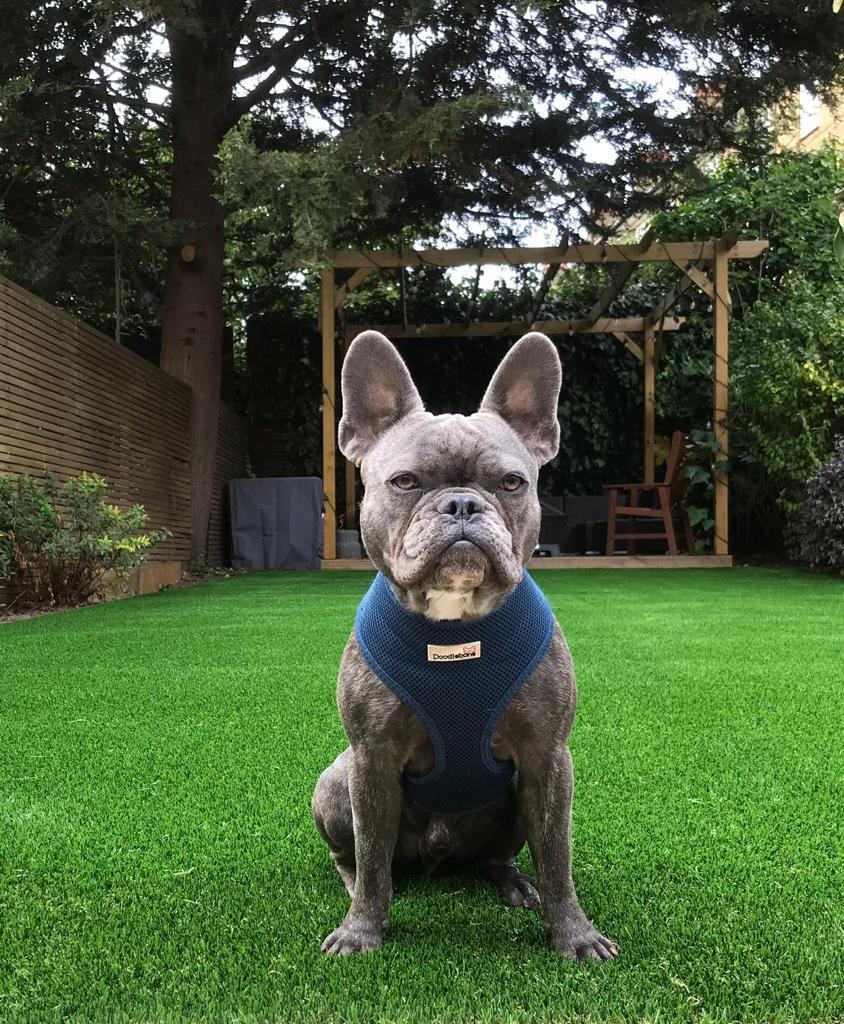 Best pet friendly grass